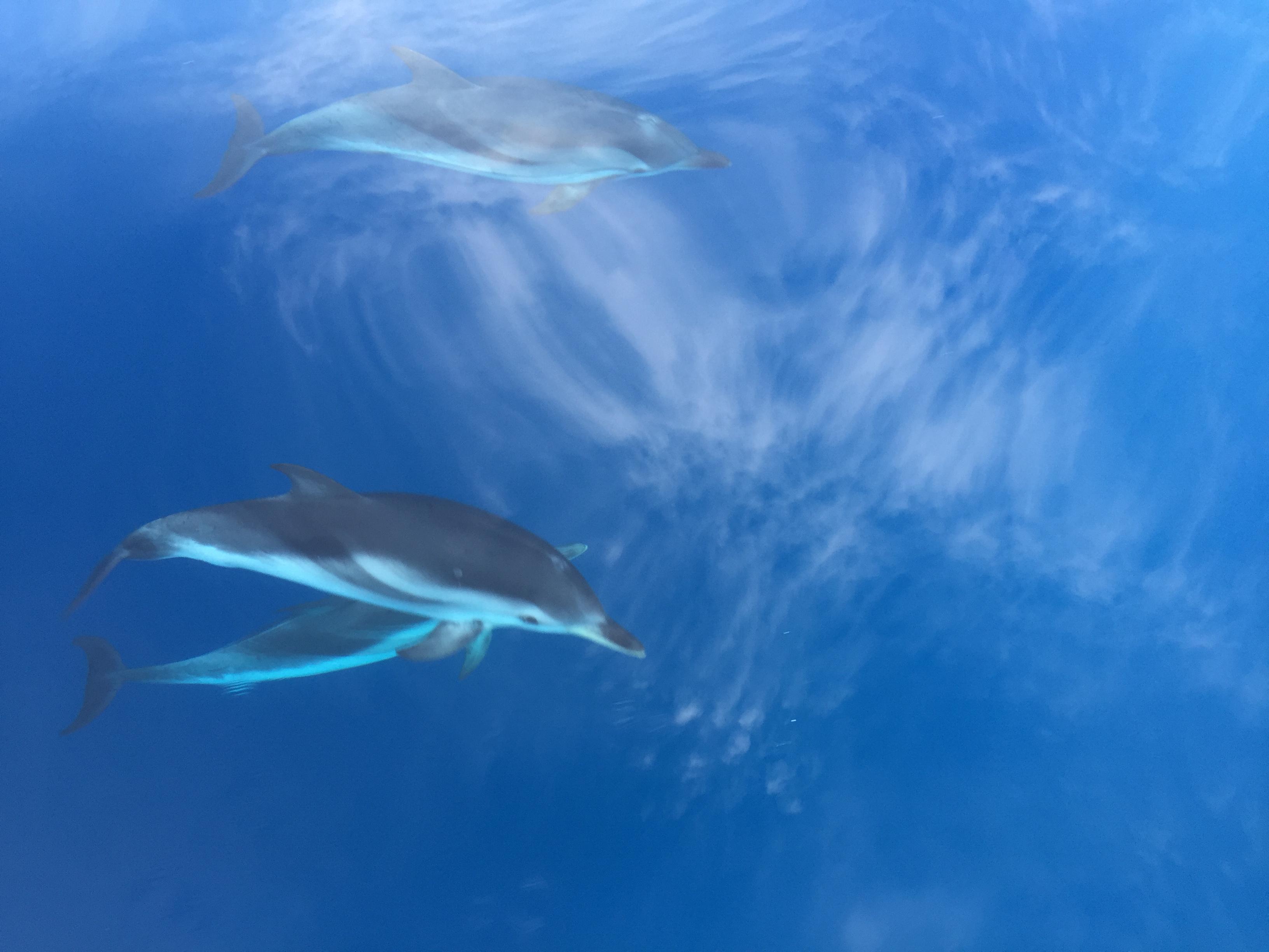 Avistar delfines