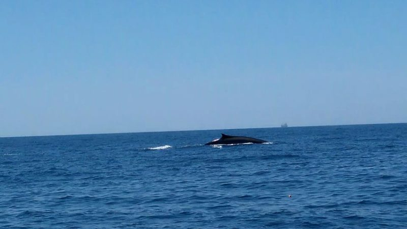 Sighting whales