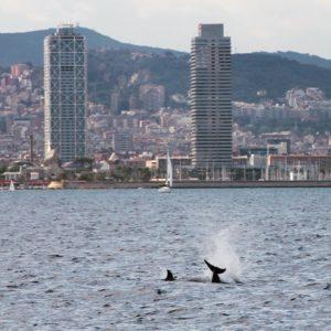 Paseo en barco por Barcelona